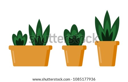 Indoor home office plants royalty Set Vector Set Of House Pot Plants Indoor House Plants For Home And Office Decoration Yhomeco Sansevieria Random Royaltyfree Vectors Imagericcom