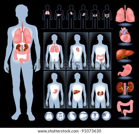 set of human anatomy parts