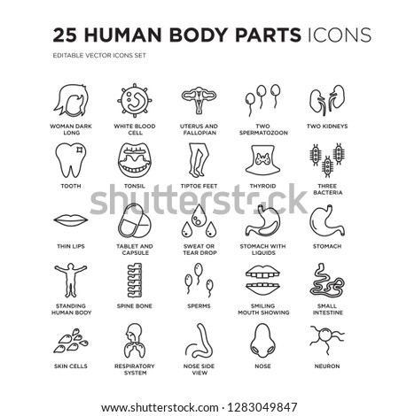 Set of 25 Human Body Parts linear icons such as Woman dark long hair, White blood cell, Uterus and Fallopian tube, Two Spermatozoon, vector illustration of trendy icon pack. Line icons with thin line