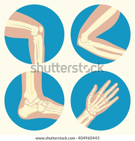 set of human joints  knee