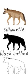 Set of hyena in color, silhouette and black outline on white background illustration