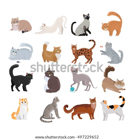 set of icons with cats flat