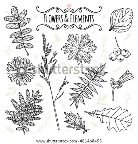 Set of illustrations of plants. Sketch. Freehand drawing