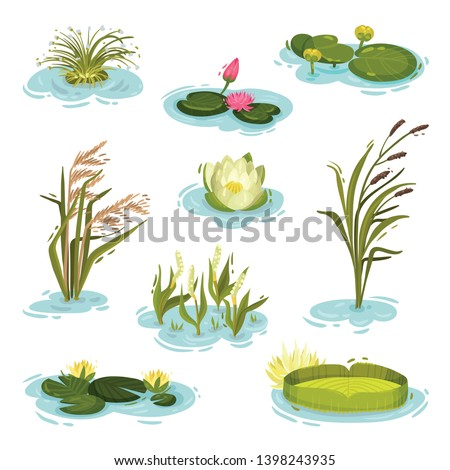 set of images of water lily