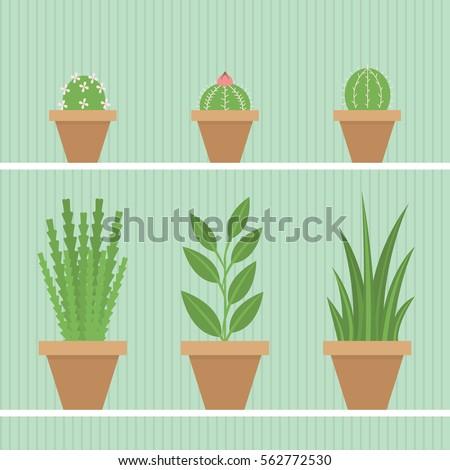 set of 6 indoor plants in pots