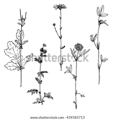 Set of ink drawing wild flowers with leaves,  wild plants,hand drawn vector botanical illustration in vintage style, isolated monochrome floral elements #439583713