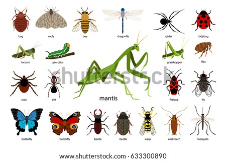 free vector insects download free vector art stock graphics images