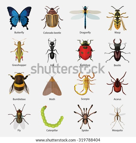 set of insects flat style