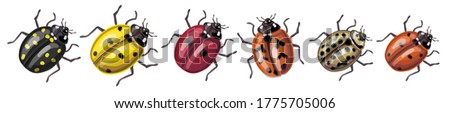 set of insects   ladybugs of