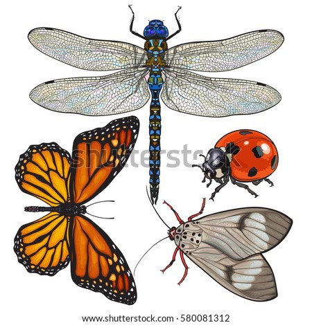 set of insects like dragonfly