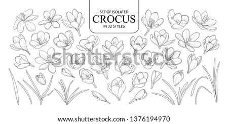 set of isolated crocus in 32