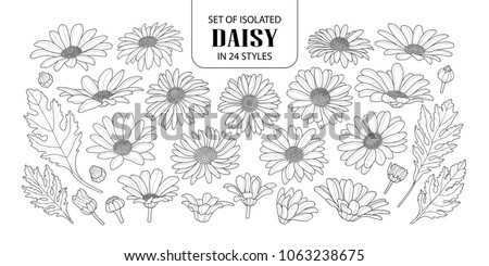 set of isolated daisy in 24