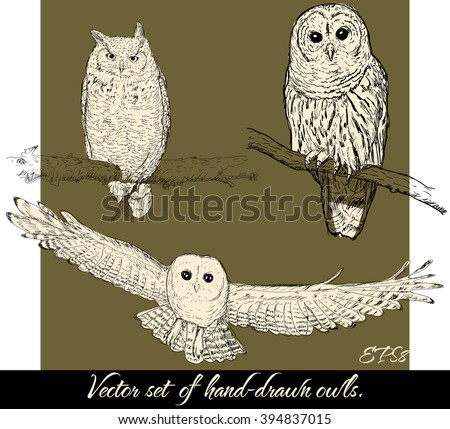 set of isolated hand drawn owls ...