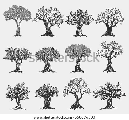 Set of isolated olive trees icons. Ancient mediterranean greek plant for fruit food and oil, flora with foliage and berry. Agriculture logo and vegetarian, healthy nutrition, drink and grove banner