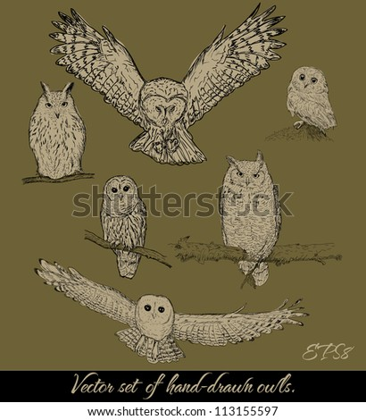 Set of isolated owls. Vector illustration EPS8