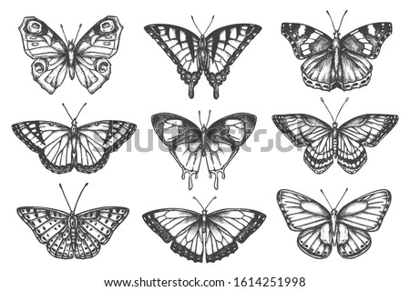 Set of isolated sketch of butterfly. Hand drawn tattoo of moth. Swallowtail and gossamer-winged, skipper and machaon, monarch insect. Fly and flight, flying animal. Botany and fauna