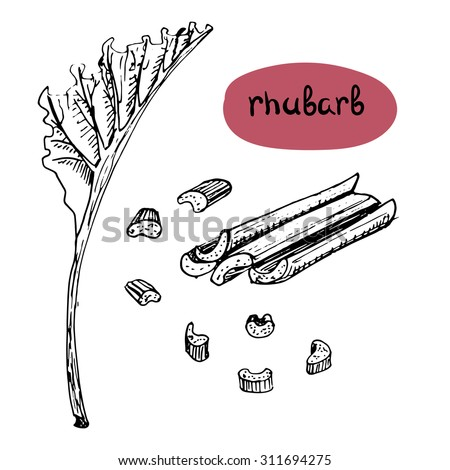 Set of isolated sketchy style rhubarb/ Monochrome hand drawn vector illustration