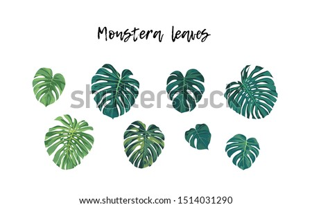 Set of isolated tropical plants, monstera or Philodendron palm leaves, vector illustration.