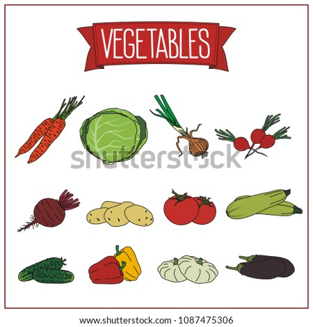 Set of isolated vegetables on white background: carrots, cabbage, onion, radish, beet, potatoes, tomato, zucchini, cucumber, bell pepper, squash, eggplant.