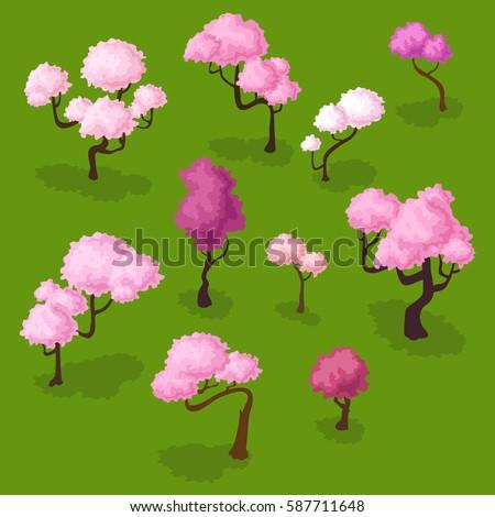 Set of isometric sakura trees, blooming spring cherry isolated on white Plum flowers, pink  sakura on green isometric plum trees cherry trees sakura isometric cherry on green set plum tree spring