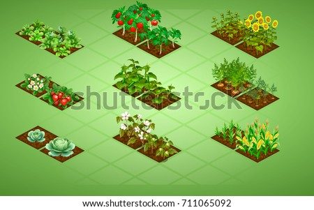 set of isometric vegetables