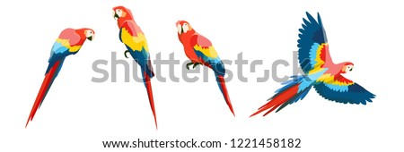 Set of large red-blue macaw parrots. Flying and sitting on the branches of parrots. Wildlife of the jungle and tropical forests of the Amazon. Realistic vector animals isolated on white background.
