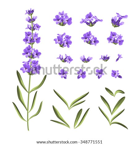 set of lavender flowers