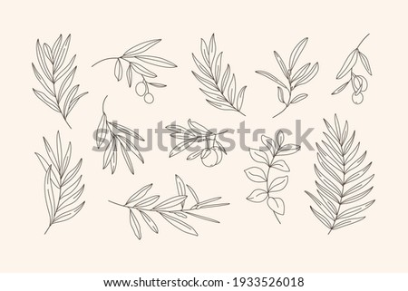 Set of Leaves and Branch. Outline Palm leaf and Olive Branch In a Trendy Minimalist Style. Vector Illustration for printing on t-shirt, Web Design, beauty Salons, Posters, creating a logo and Patterns
