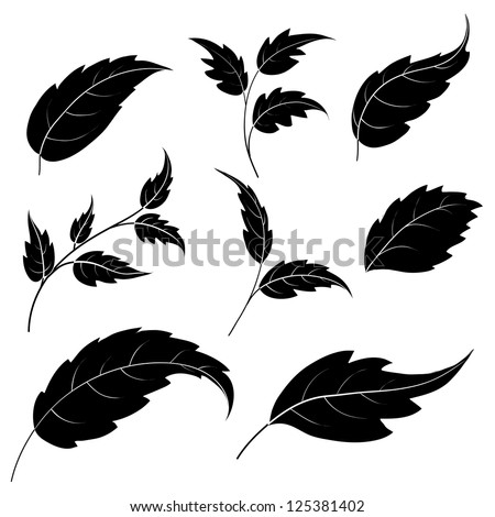 Set of leaves of plants and trees, black silhouettes on white background. Vector