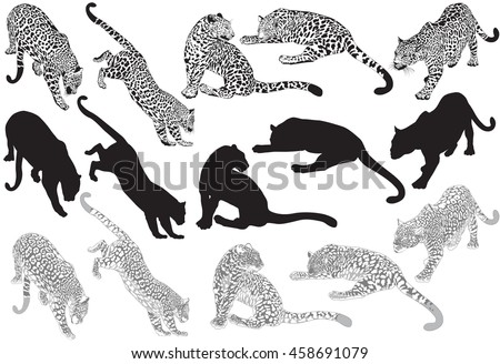 set of leopard on a white