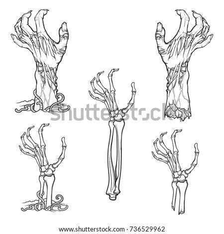 set of lifelike depicted