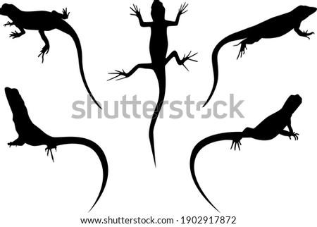 set of lizards black silhouette Foto stock ©