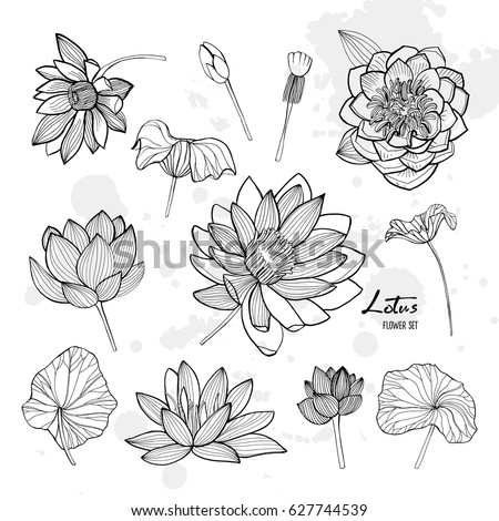 set of lotus flower in