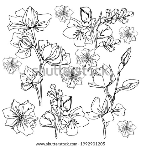 Set of magnolia buds. Large spring flowers. coloring book for children and adults. For wallpaper, design, coloring, textiles, paper. Stock graphics, isolate on white.