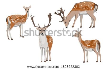 Set of male and female European fallow deer. Deer Dama dama. Wild animals of Europe, America and Scandinavia. Vector illustration Foto stock ©