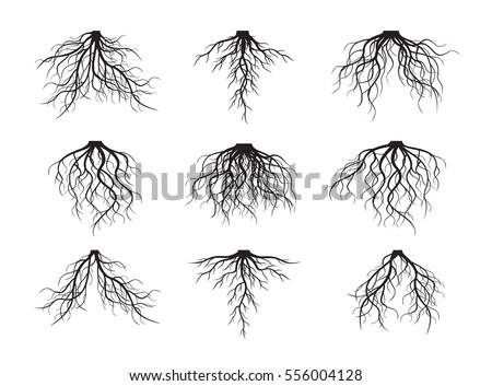 Set of many different black Roots. Vector outline Illustration. Stock fotó ©