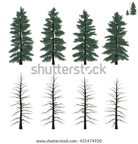 set of mature firs trees