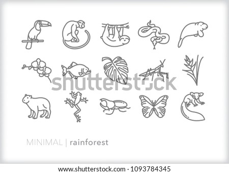 Set of 15 minimal rain forest animal and plant icons including slot, birds, reptiles, fish, bugs, flowers, and mammals