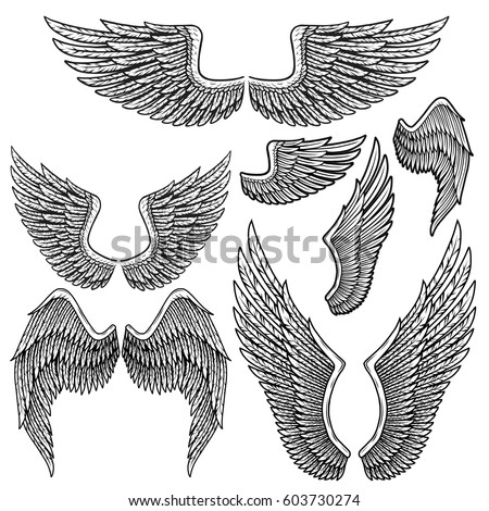 Set of monochrome bird wings of different shape in open position isolated on white background