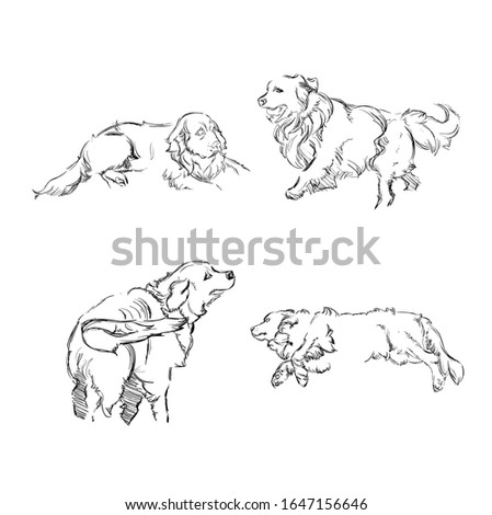 Set of Monochrome Sketches of Cute Shaggy Dogs on White Background. Vector Illustration of a Beautiful Sketched Labrador-Retriever. Freehand Black and White Drawing. Linear Sketch. Realistic Style.