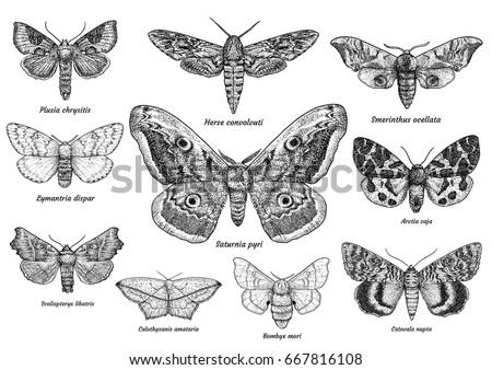 set of moths and butterflies