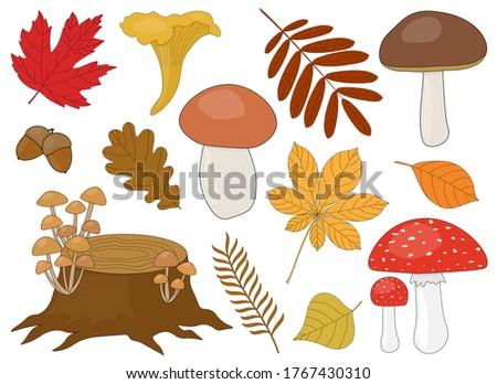 set of mushrooms brown white
