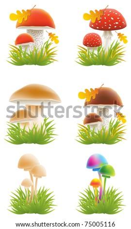 Set of mushrooms vector illustrations