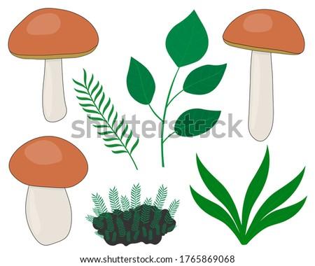set of mushrooms with tree