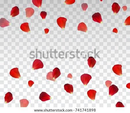 set of naturalistic rose petals