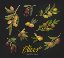 Set of olive branches or tree twigs with berries. Nature olive oil leafs isolated,  berry for salad ingredients. Agriculture or painting theme, vegetarian or vegan food, fruit drink, bottle sticker