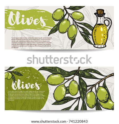 Set of olive oil flyers. Olive branch. Design elements for banner, flyer, poster. Vector illustration