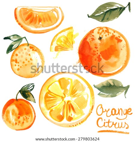 set of oranges painted with