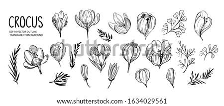 set of outline spring flowers