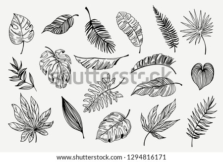 Set of outline tropical leaves. Hand drawn illustration converted to vector